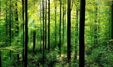 Miško ištraukimas