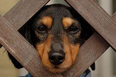 Šunų skiepai, sterilizacija, kastracija