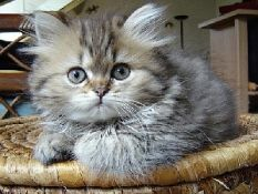 Gyvūnų dokumentų tvarkymas išvykimui į užsienį