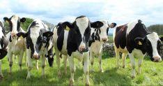Ekologiškų gyvulių prekyba