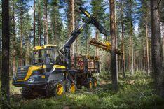 Miško kirtimas
