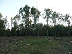 Miško pirkimas su žeme