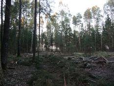 Stataus miško pirkimas