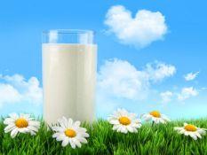 Konsultavimas pieno kokybės klausimais