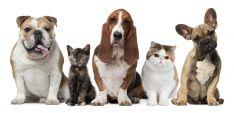 Gyvūnų stacionaras