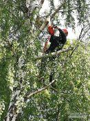 Pavojingų medžių pjovimas su aukštalipių įranga
