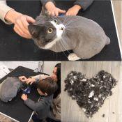 Kačių kirpimas