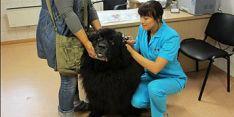 Gyvūnų ligų gydymas ir diagnostika