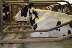 Gyvulių gydymas