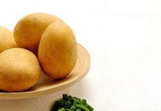 Sėklinės bulvės Concordia