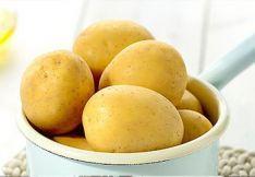 Sėklinės bulvės Anuschka
