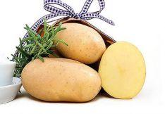 Sėklinės bulvės Jelly