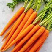 Skustos morkos