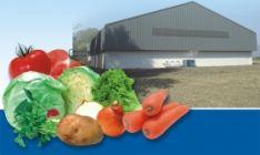 Daržovių ir vaisių saugojimo technologijos.