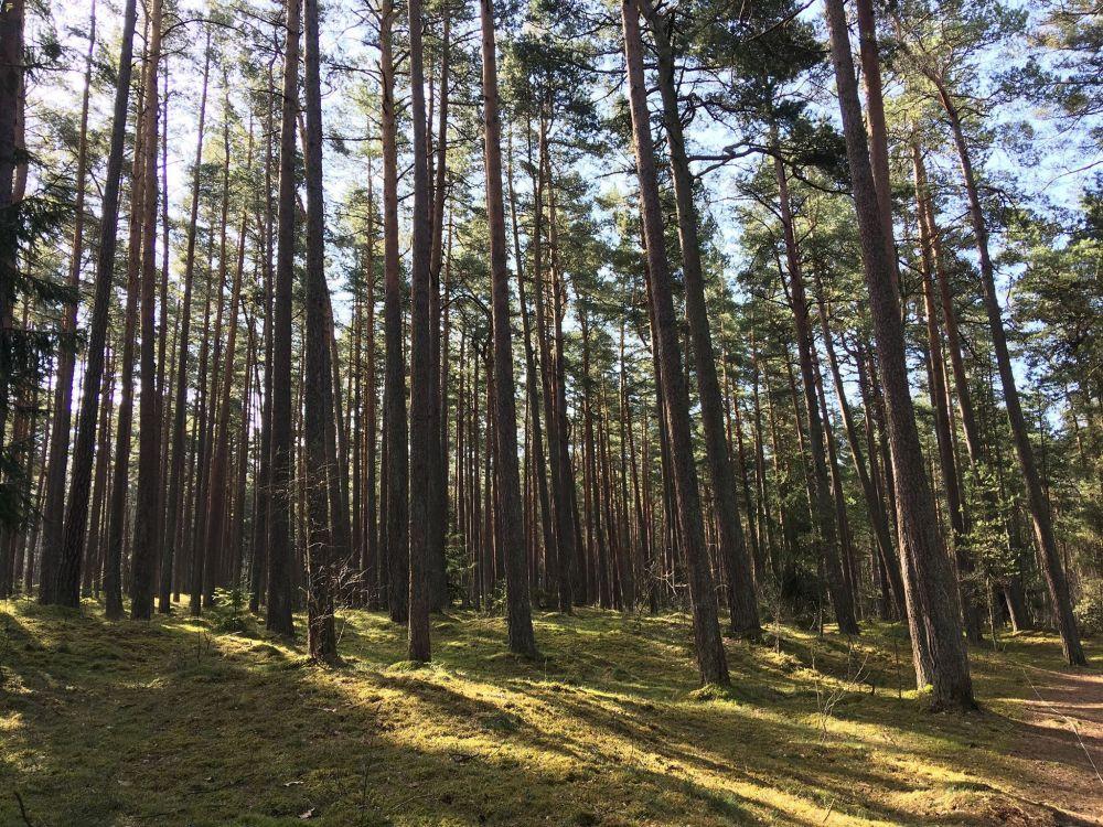 Sužinokite savo miško kainą