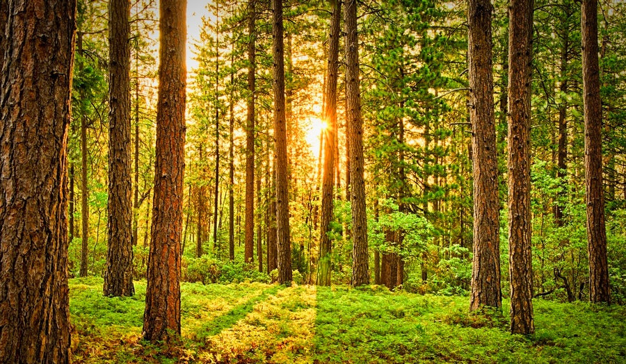 Nusprendėte parduoti mišką? Miško supirkimas - puikus sprendimas jums