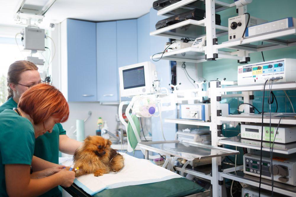 Kaip pasirinkti veterinarijos kliniką?