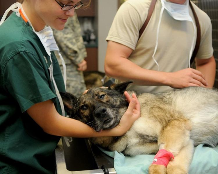 Kokią veterinarijos kliniką pasirinkti Vilniuje?