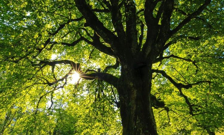 Avariniai medžiai: kokias problemas jie sukelia?
